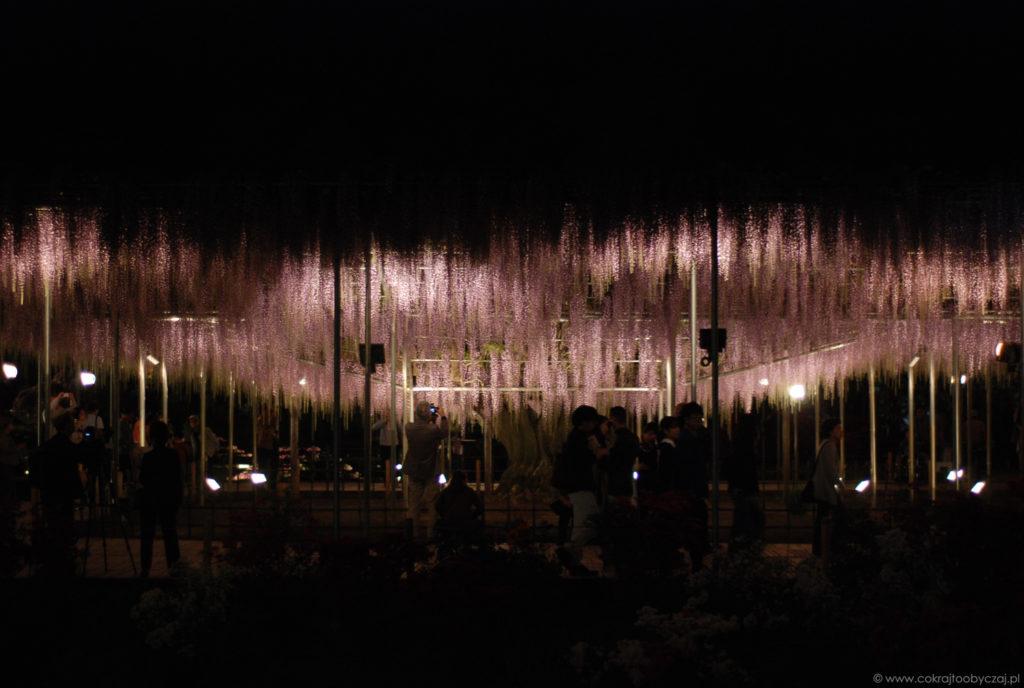 Podświetlona wisteria w Ashikaga Flower Park