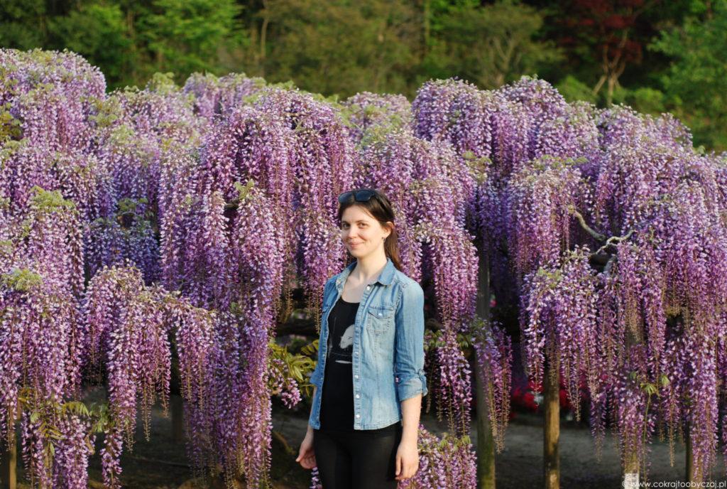 Wisteria w Ashikaga Flower Park - Japonia