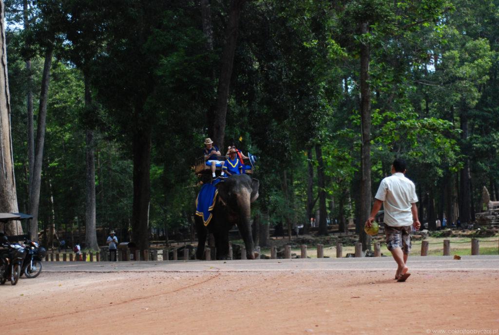 Niestety niektórzy nadal decydują się zwiedzanie z grzbietu słonia. Niestety - ponieważ nie jest to dobre dla tych zwierząt.