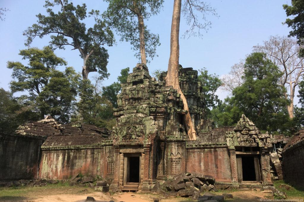 Świątynia Ta Prohm, znana ze stopniowo pochłaniających jej mury i wnętrza drzew oraz... pleneru do Tomb Raidera.