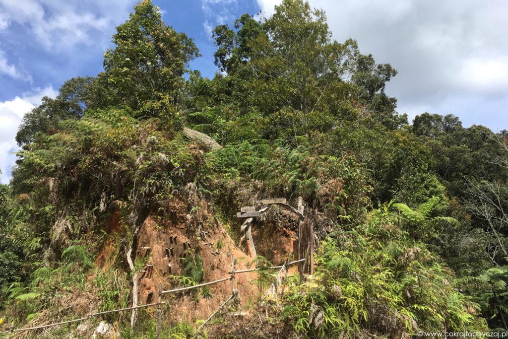 Tak prezentuje się wejście na teren Terra Tree House.