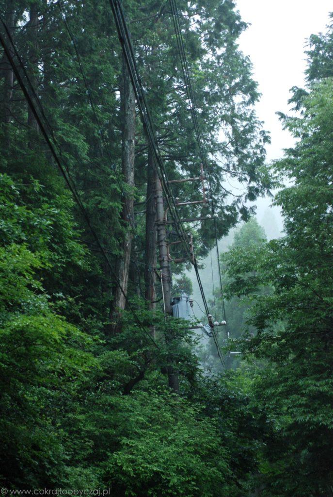 Kable w koronach drzew, góra Hiei.