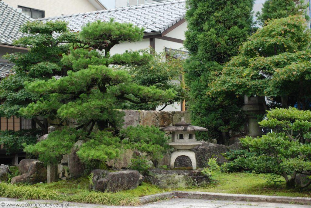 Tradycyjny ogród w stylu japońskim, kamienne latarnie i sosna.