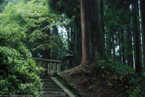 Wiekowe drzewo i kamienne schody do świątyni.