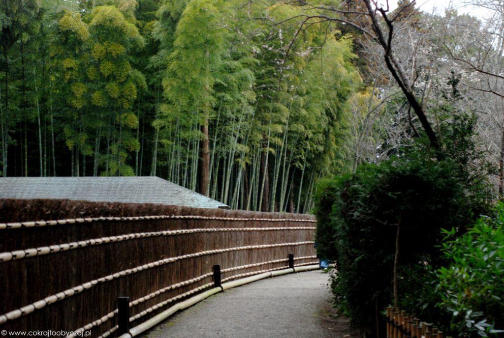 Bambusowy zagajnik w Mito Kairakuen, prefektura Ibaraki.