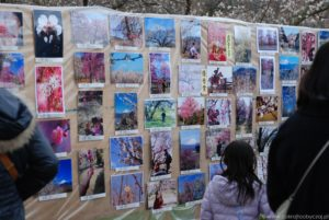 Wystawa fotografii z okazji ume matsuri w okolicy Odawara.