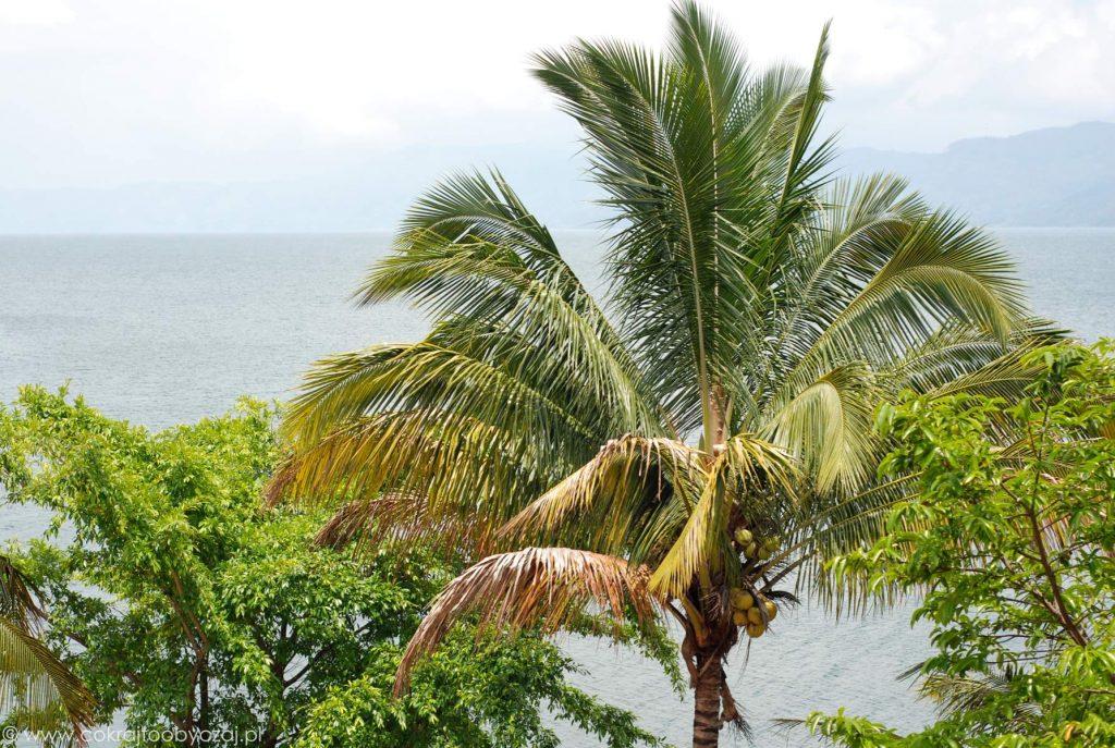 Palma kokosowa i widok na jezioro Toba.
