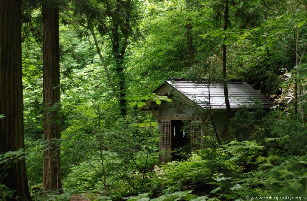Z wizytą w Nagano: Togakushi